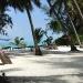 beach-and-palms-r
