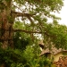 the-big-baobab-tree-between-villa-8910-800x600